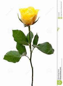 Single Yellow Rose Clipart - Clipart Suggest