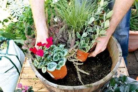 plant large winter containers amateur gardening