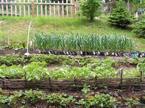 vegetable gardening blogs wshg net terracing a vegetable garden featured