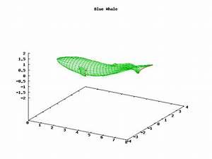 Blue Whale Info  Blue Whale Diagram