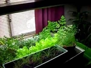Indoor Grow Anleitung : indoor aquaponics garden free food youtube ~ Eleganceandgraceweddings.com Haus und Dekorationen