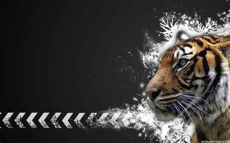 Tiger Wallpaper High Definition Wallpapers