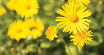 33 types of yellow flowers proflowers