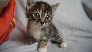 BEST FUNNY KITT... Cute Cats