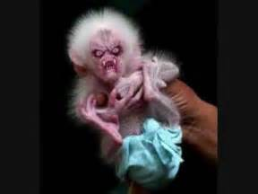 Ugly Ugliest Animal in the World