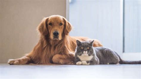 Cat And Dog 8 Tricks To Help Your Cat And Dog To Get Along Mental Floss