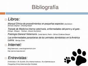 Cl U00ednica De Animales Menores