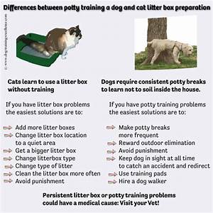 difference between dogs and cats that can help in a multi With litter box training a dog