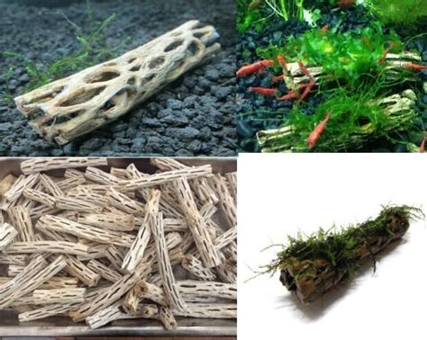 Wood For Aquascaping by Cholla Wood 7cm Lot X 2 Holley Bois Racine Crevettes Nano