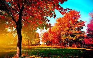 Autumn Wallpaper Examples for Your Desktop Background