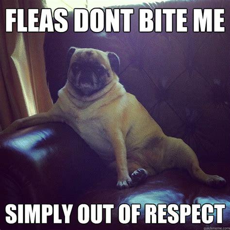 Dog Bite Meme - racist jew memes quotes