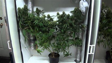 Indoor Closet Grow  Growing Marijuana Indoors