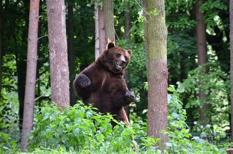 bear forest eco park  photo  pixabay