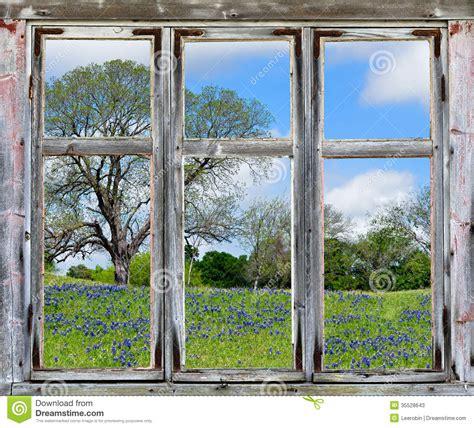 texas bluebonnets vista    window frame stock