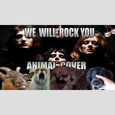 Queen  We Will Rock You (animal Cover) Youtube