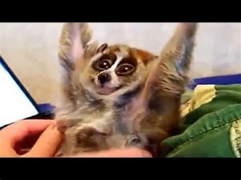 drole exotique bebes animaux compilation  youtube