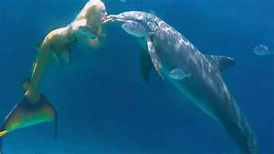 Mermaid Melissa Swimming With Her Dolphin Friends