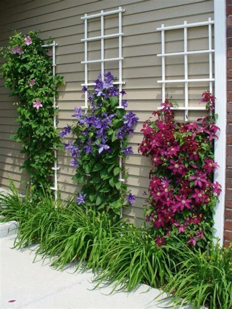 Clematis Trellis by 25 Best Ideas About Clematis Vine On Clematis
