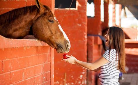 care horse take horses need animal
