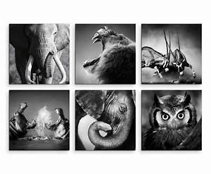 Schwarz Weiß Bilder Tiere : tiere schwarz weiss 01766 ~ Markanthonyermac.com Haus und Dekorationen