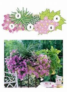 Künstliche Blumen Für Balkonkästen : balkonblumen fantasievoll kombiniert garten balkon ~ A.2002-acura-tl-radio.info Haus und Dekorationen