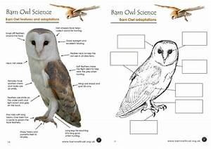 Owl colouring pages - The Barn Owl Trust