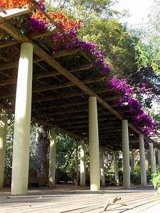 11, Stunning, Pergola, Cover, Ideas, For, Your, Backyard