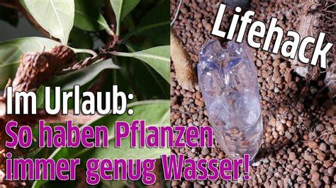 blumen gießen urlaub lifehack pflanzen gie 223 en im urlaub so bekommen blumen genug wasser f 252 r ca eine woche