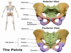 The Passage  U2013 Maternal Pelvis