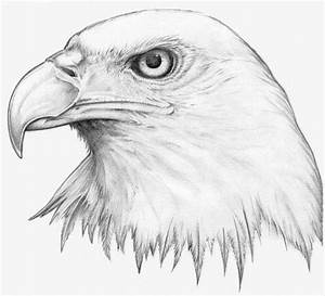 Cool Drawings Of Animals - Pencil Art Drawing