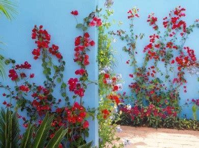 Plantes Grimpantes Pour Décorer Un Mur