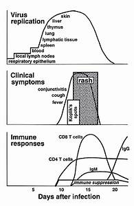 Pathogenesis Of Measles Virus Infection
