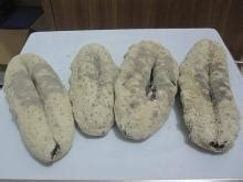 sea fish types  india tamil nadu sea fish types