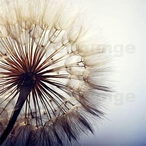 Bild Pusteblume Schwarz Weiß : gro e pusteblume poster online bestellen posterlounge ~ Bigdaddyawards.com Haus und Dekorationen