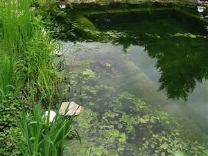 Schwimmteich Oder Pool : algen im schwimmteich wieso algen zum schwimmteich dazugeh ren algenbelastung im schwimmteich ~ Whattoseeinmadrid.com Haus und Dekorationen
