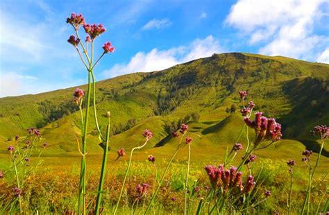 sebelum  luar negeri kamu   padang rumput cantik