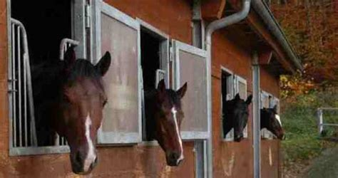 pensionsbetrieb der wintermuehle pferdesport wintermuehle