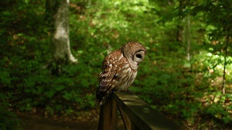 Owl Wallpaper by 20 Owl Wallpapers Backgrounds Images Freecreatives