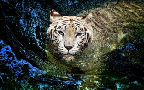 Tiger 3d High Quality Wallpapers 6603  Amazing Wallpaperz