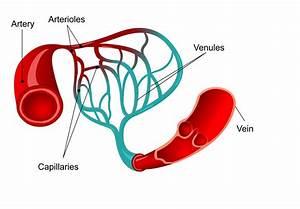 Idiopathic Pah Vasodilator Response Reflects Blood Flow