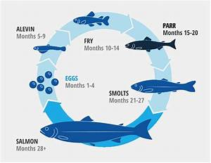 Blue Whale Life Cycle Pictures To Pin On Pinterest