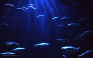 Free Fish Aquarium Desktop Background