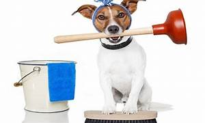 house cleaning for dogs owners clean simple cleaning With dog cleaning house