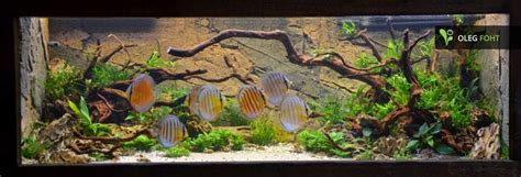 Aquascaping Discus  Google Zoeken  Discussen Aquarium