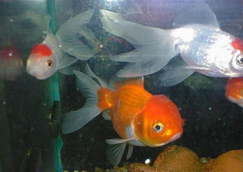 temperature aquarium poisson loisir de l aquariophilie الصفحة 4 منتديات تونيزيـا سات