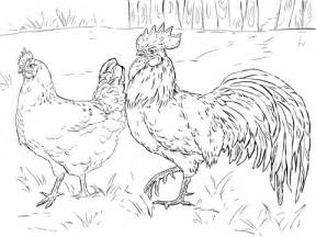 hen  rooster coloring page  printable coloring pages