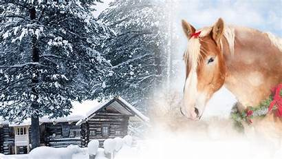 Horse Christmas Scenes Country Wallpapers Winter Collage