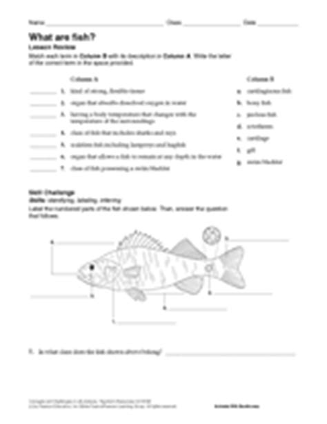 the anatomy of a fish blank printable teachervision