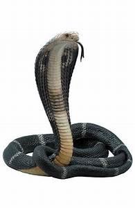 King Cobra, animal statues, wildlife statues, animal home