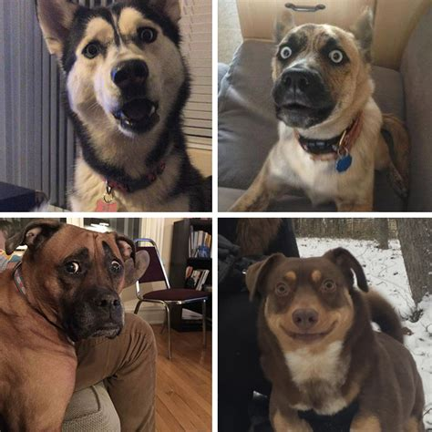perfect names  describe groups  dog breeds barkpost